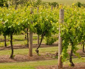 Mt Coghill Vineyard - Accommodation BNB