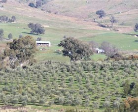 Wymah Organic Olives and Lambs - Accommodation BNB