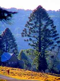Bunya Mountains National Park - Accommodation BNB