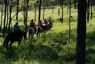 Hunter Valley Horse Riding and Adventures - Accommodation BNB