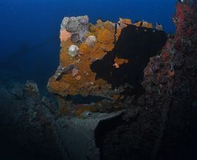 Lady Bowen Dive Site - Accommodation BNB