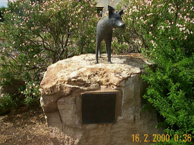 Dingo Statue - Accommodation BNB