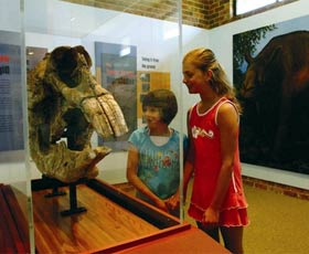 Australian Museum Diprotodon Exhibition - Accommodation BNB