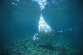 Manta Ray Bay Dive Site - Accommodation BNB