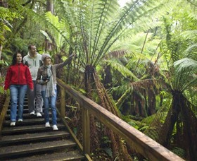 Otway Fly Treetop Adventures - Accommodation BNB
