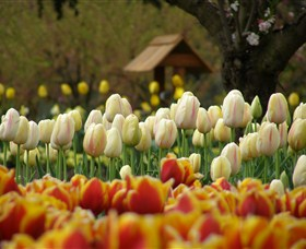 Tulip Top Gardens - Accommodation BNB