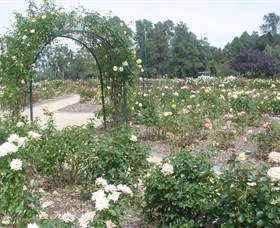 Victoria Park Rose Garden - Accommodation BNB