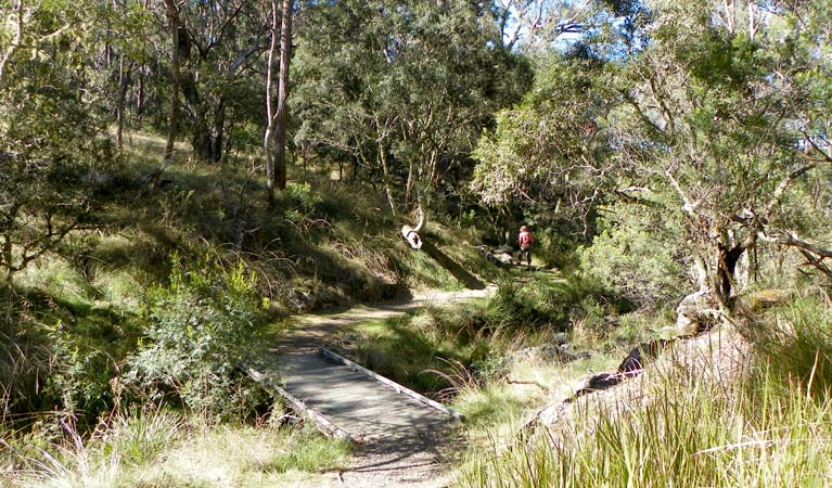 Wollomombi walking track - Accommodation BNB