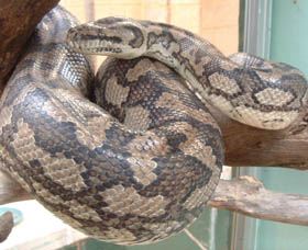 Armadale Reptile Centre - Accommodation BNB