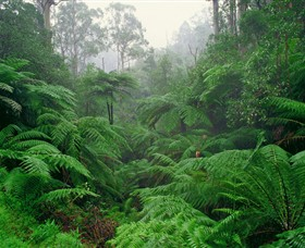 Tarra Bulga National Park - Accommodation BNB