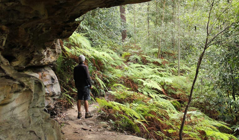 Dharug National Park - Accommodation BNB