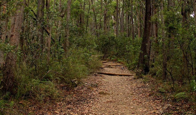Pigeon House Mountain Didthul walking track - Accommodation BNB