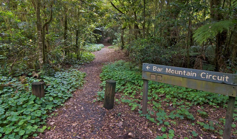 Bar Mountain circuit - Accommodation BNB