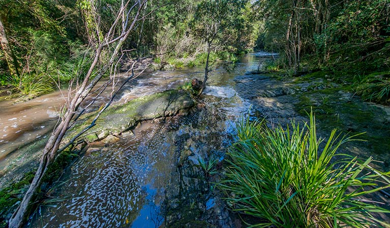 Dawson River walking track - Accommodation BNB