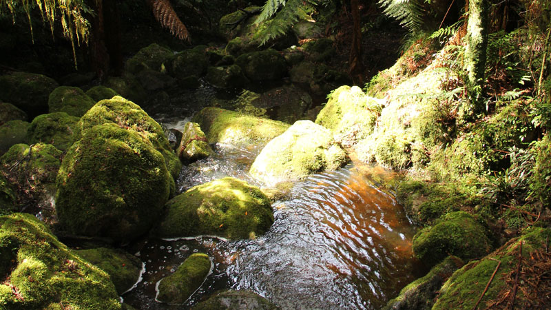 South East Forests National Park