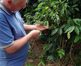 Wombah Coffee Plantation - Accommodation BNB