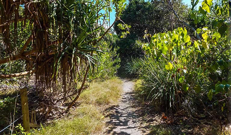 North Head walking track - Accommodation BNB