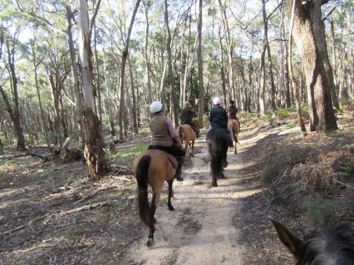 Silver Brumby Trails - Accommodation BNB