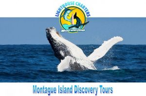 Lighthouse Charters Narooma - Accommodation BNB