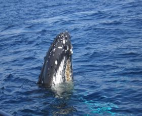 Jervis Bay Whales - Accommodation BNB