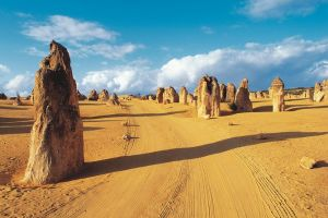 Pinnacles Desert Koalas and Sandboarding 4WD Day Tour from Perth - Accommodation BNB