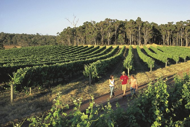 Margaret River Caves Wine and Cape Leeuwin Lighthouse Tour from Perth - Accommodation BNB