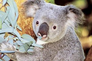 Perth Zoo General Entry Ticket and Sightseeing Cruise - Accommodation BNB