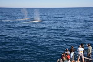 Blue Whale Perth Canyon Expedition - Accommodation BNB