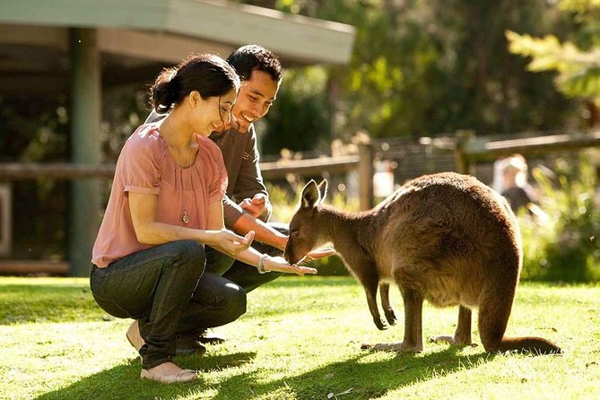 Very Best of Perth Tour - Wildlife Park  City Highlights Tour - Accommodation BNB