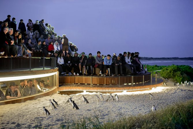 1 Day Private Phillip Island Tour VIP Charter up to 9 People - Accommodation BNB