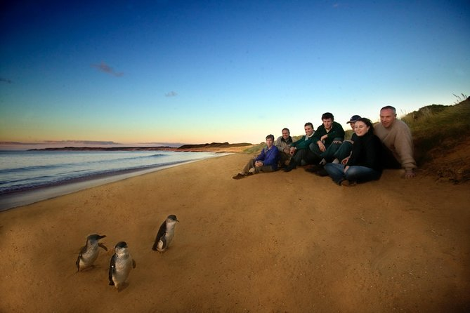 Phillip Island Ultimate Penguin Eco Tour or Skybox Experience - Accommodation BNB
