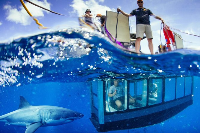 White Shark Tour with Optional Cage Dive from Port Lincoln - Accommodation BNB