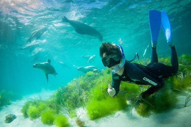 Half-Day Sea Lion Snorkeling Tour from Port Lincoln - Accommodation BNB