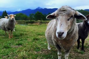 Trevena Glen Farm Animal Experience - Accommodation BNB