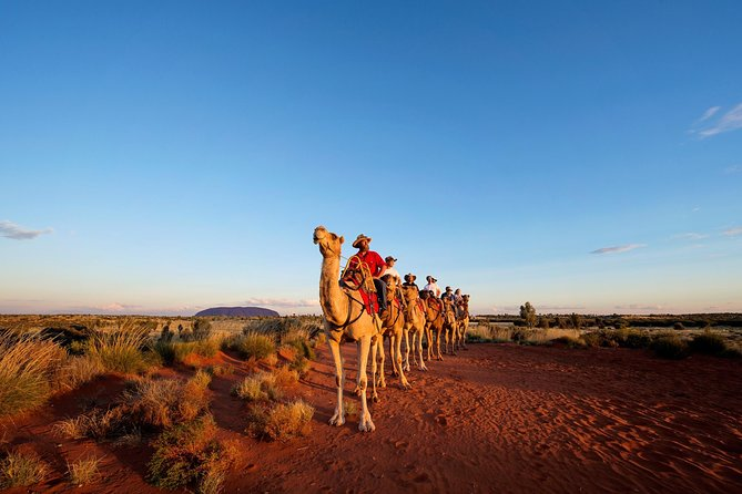Uluru Camel Express Sunrise or Sunset Tours - Accommodation BNB