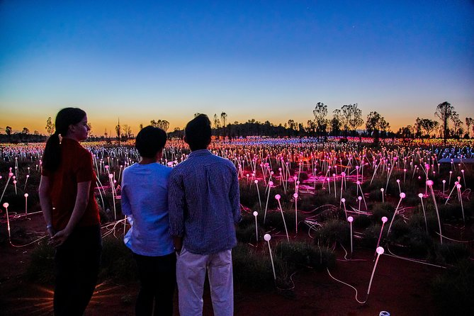 Uluru Field of Light Sunrise Tour - Accommodation BNB