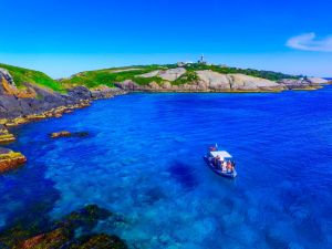 Snorkelling Montague Island - Accommodation BNB