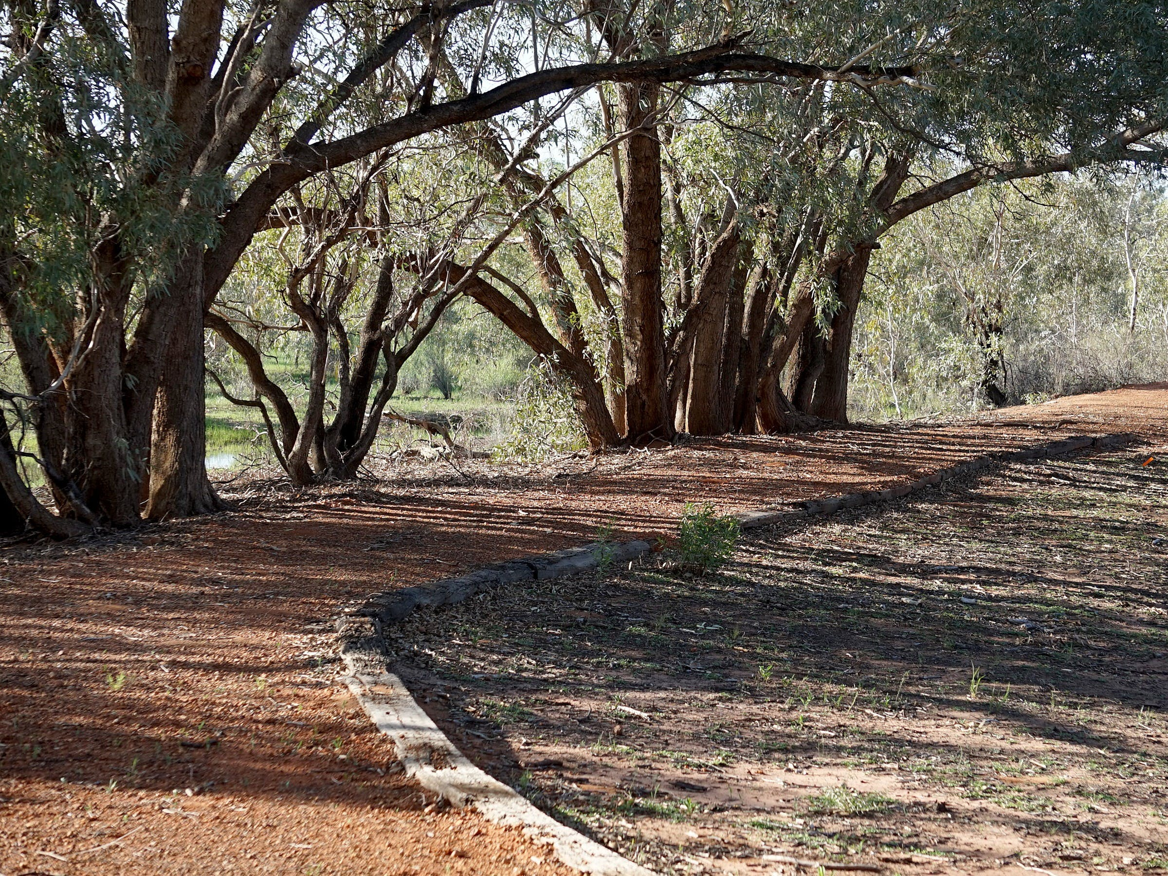 Warrego Floodplain walking track - Accommodation BNB