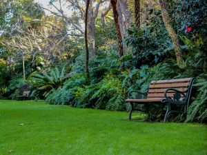 EG Waterhouse National Camellia Gardens - Accommodation BNB