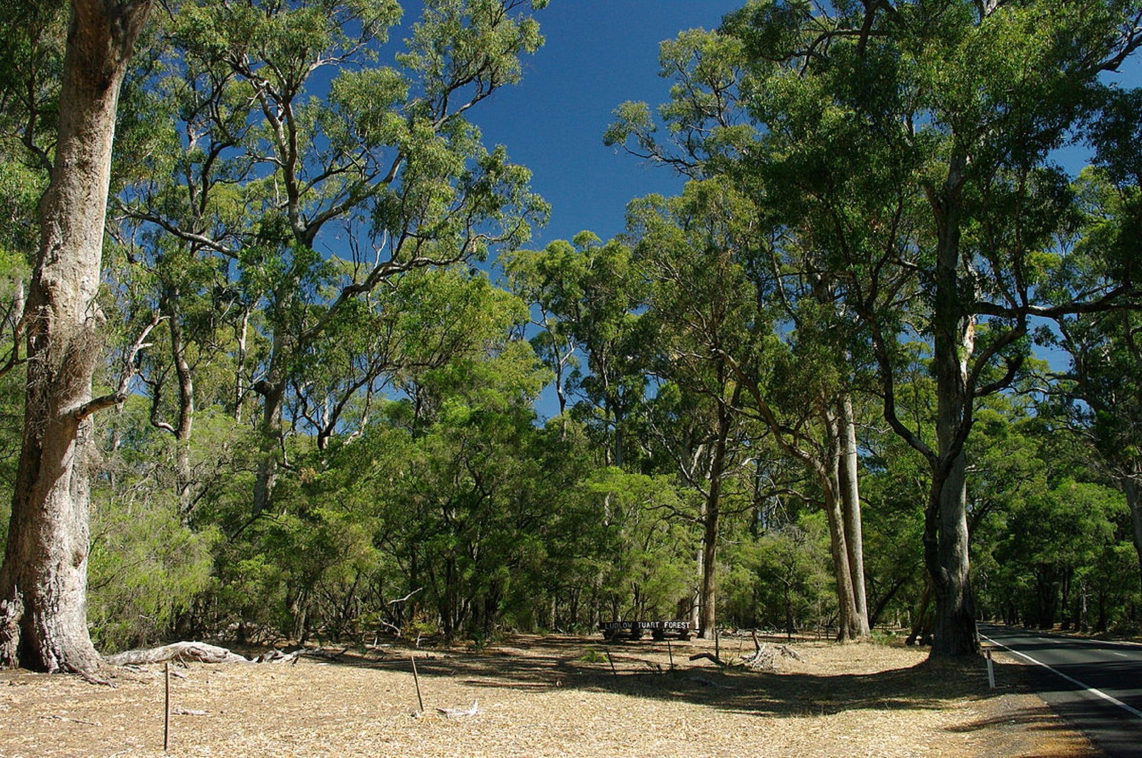 Maidens Tuart Forest - Accommodation BNB