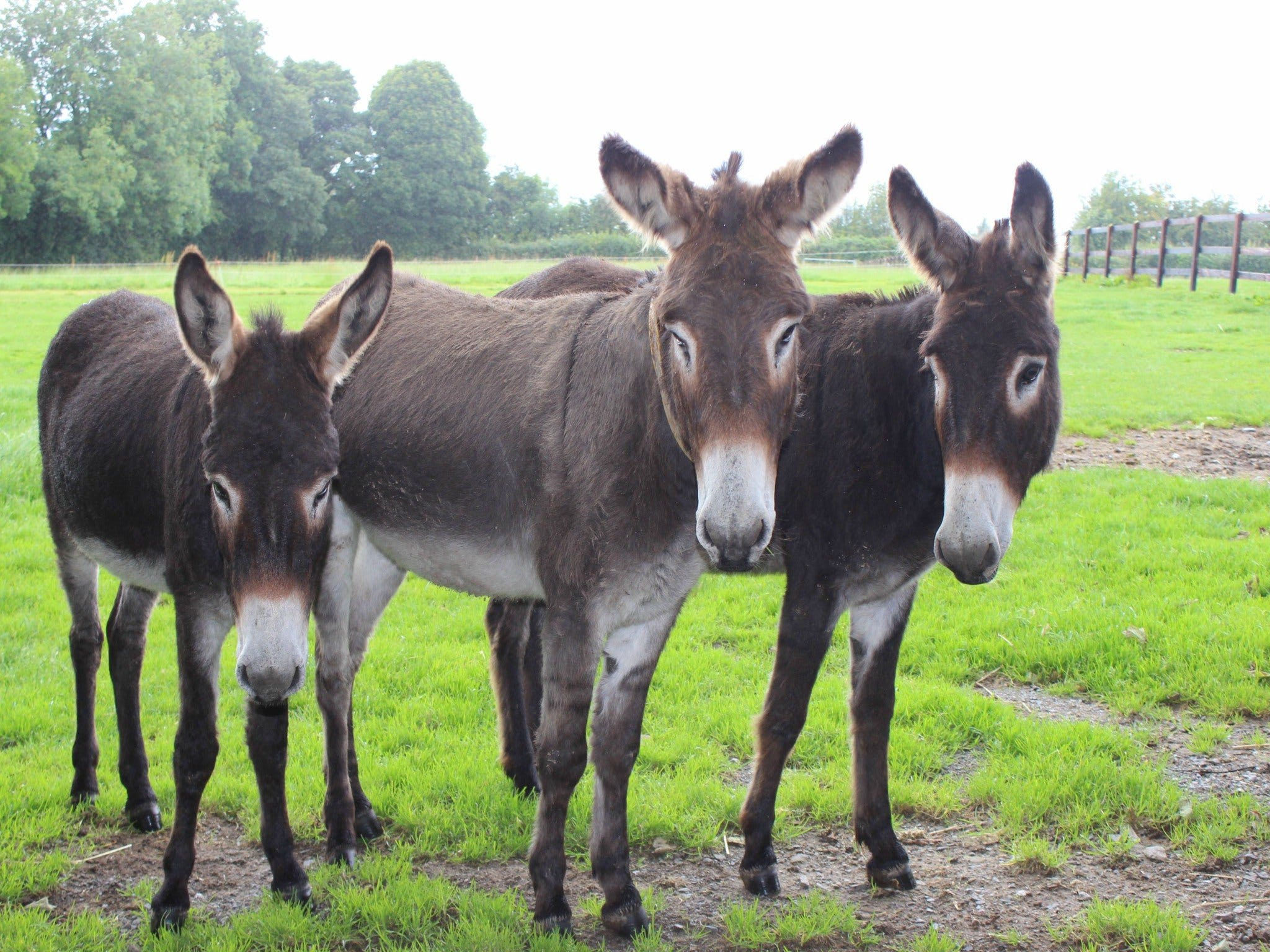 The Good Samaritan Donkey Sanctuary - Accommodation BNB