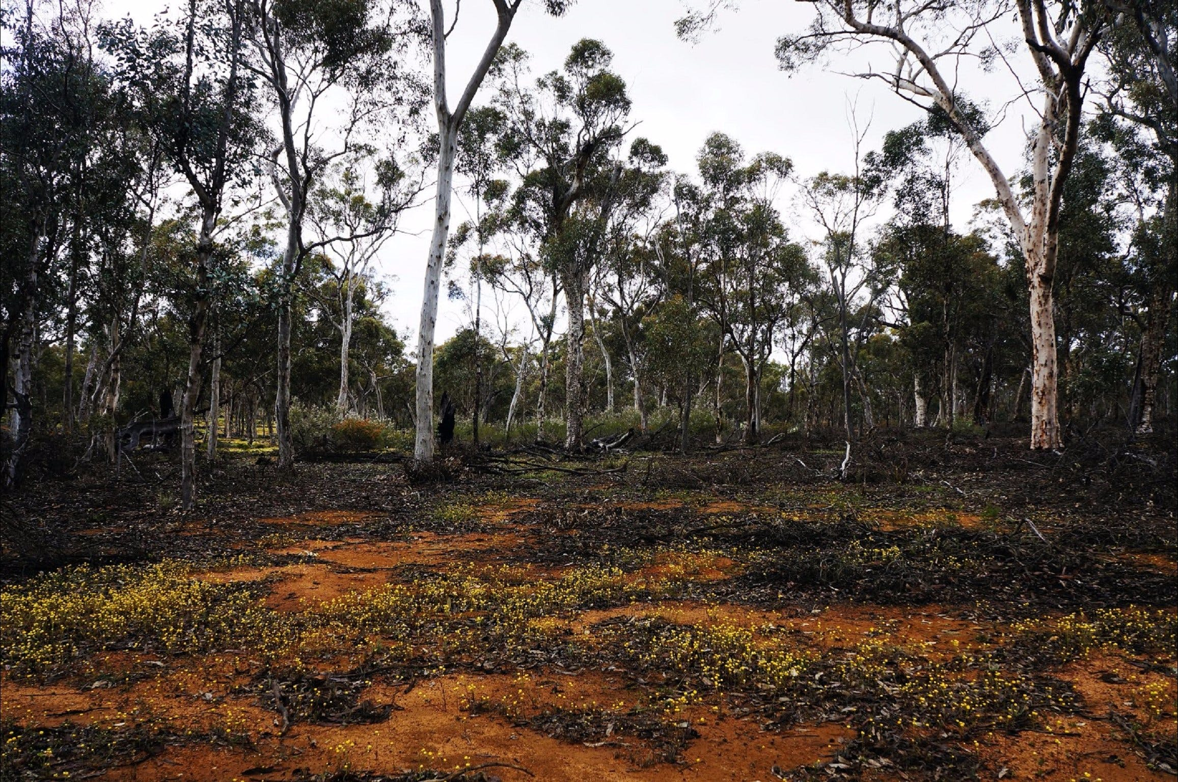 Woylie Walk Dryandra Woodland - Accommodation BNB
