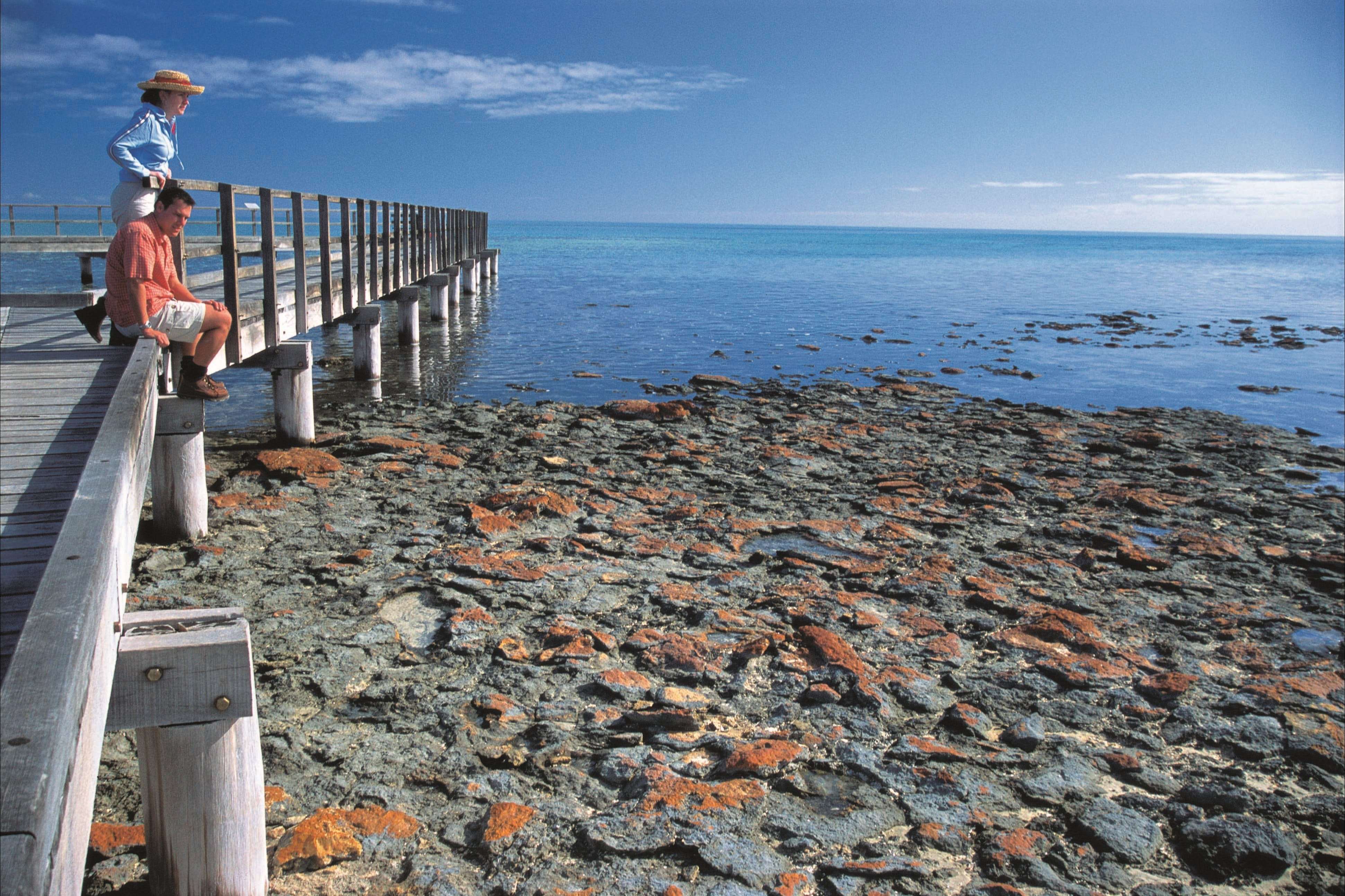 Hamelin Pool Stromatolites - Accommodation BNB
