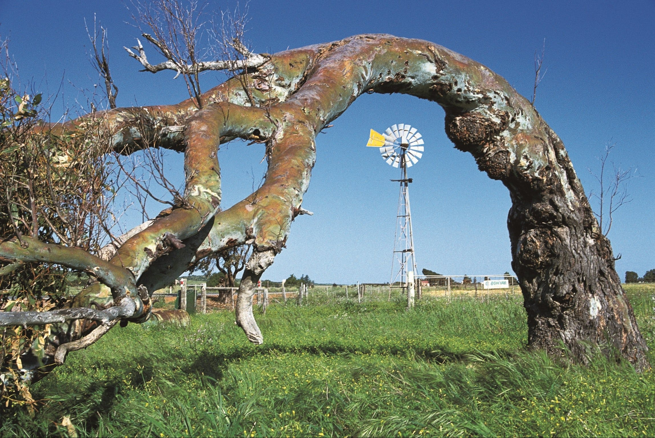 Greenough Leaning Trees - Accommodation BNB