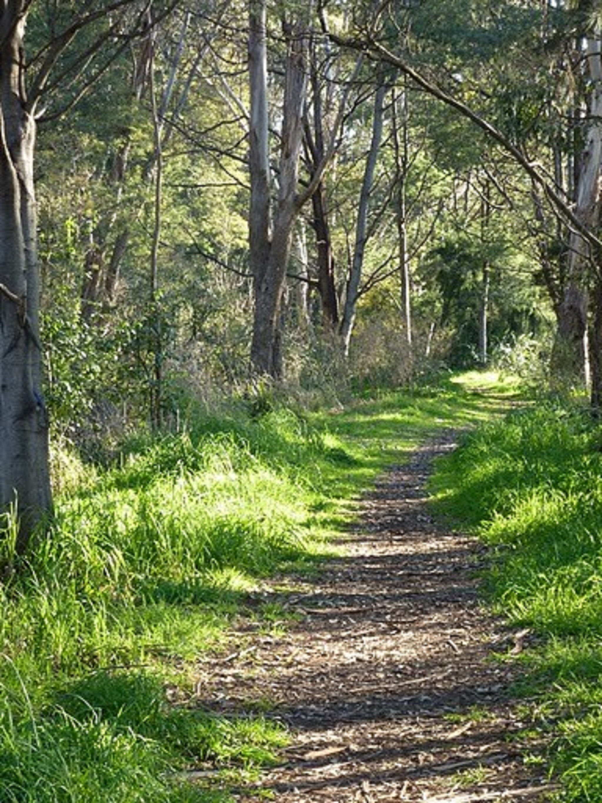 Stoodley Forest Walk and Arboretum - Accommodation BNB