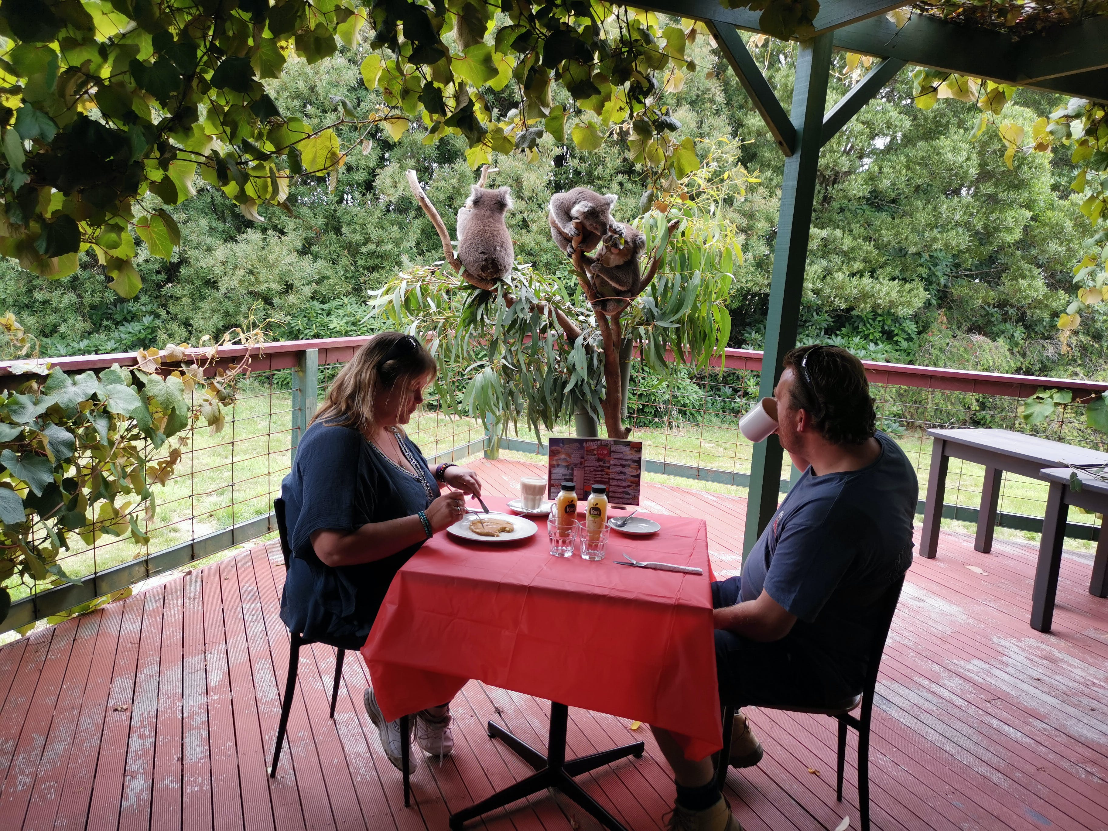 The Aussie Stop offering Breakfast with Koalas - Accommodation BNB