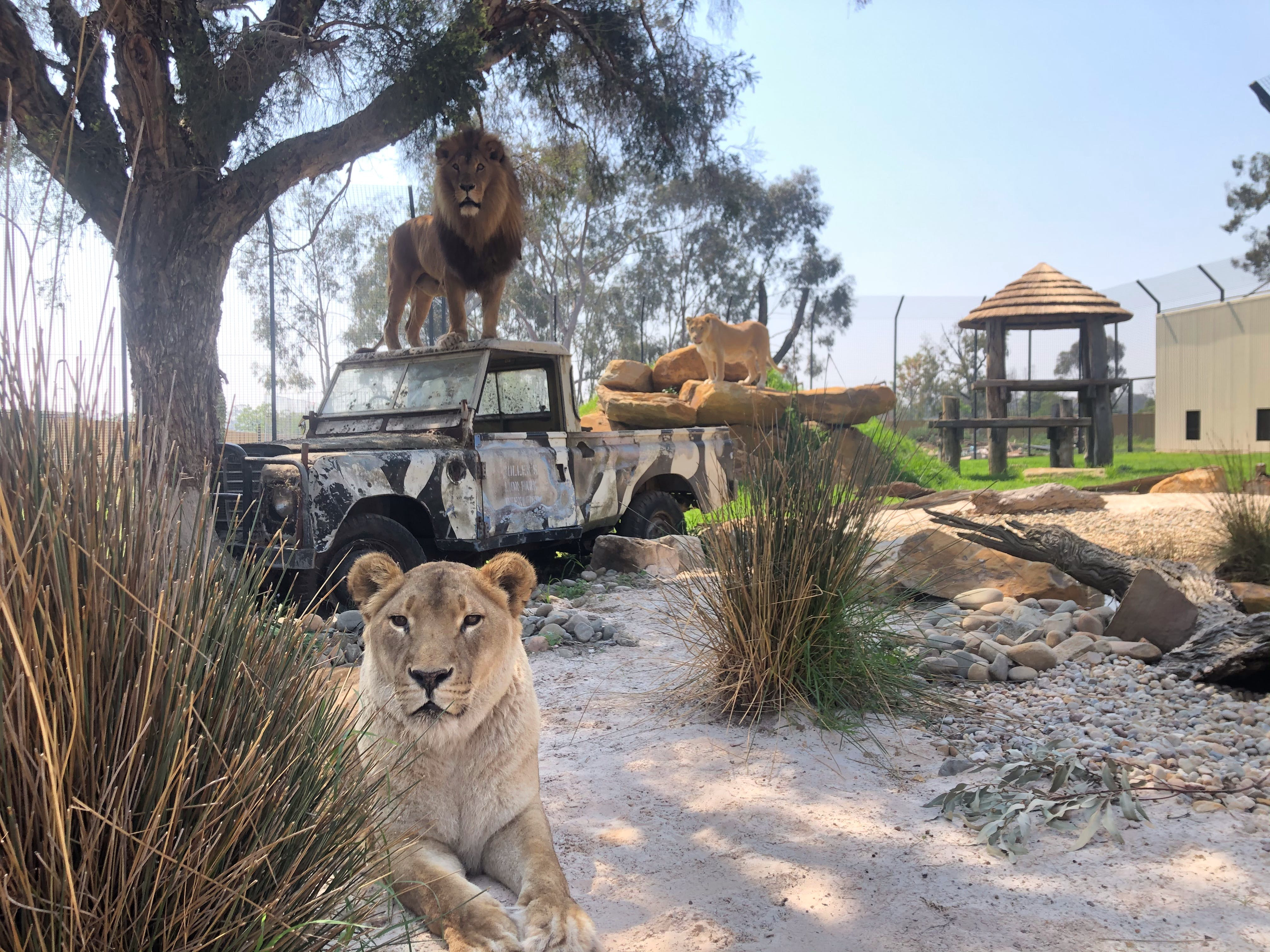 Zambi Wildlife Retreat - Accommodation BNB