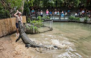 Hartley's Crocodile Adventures - Accommodation BNB