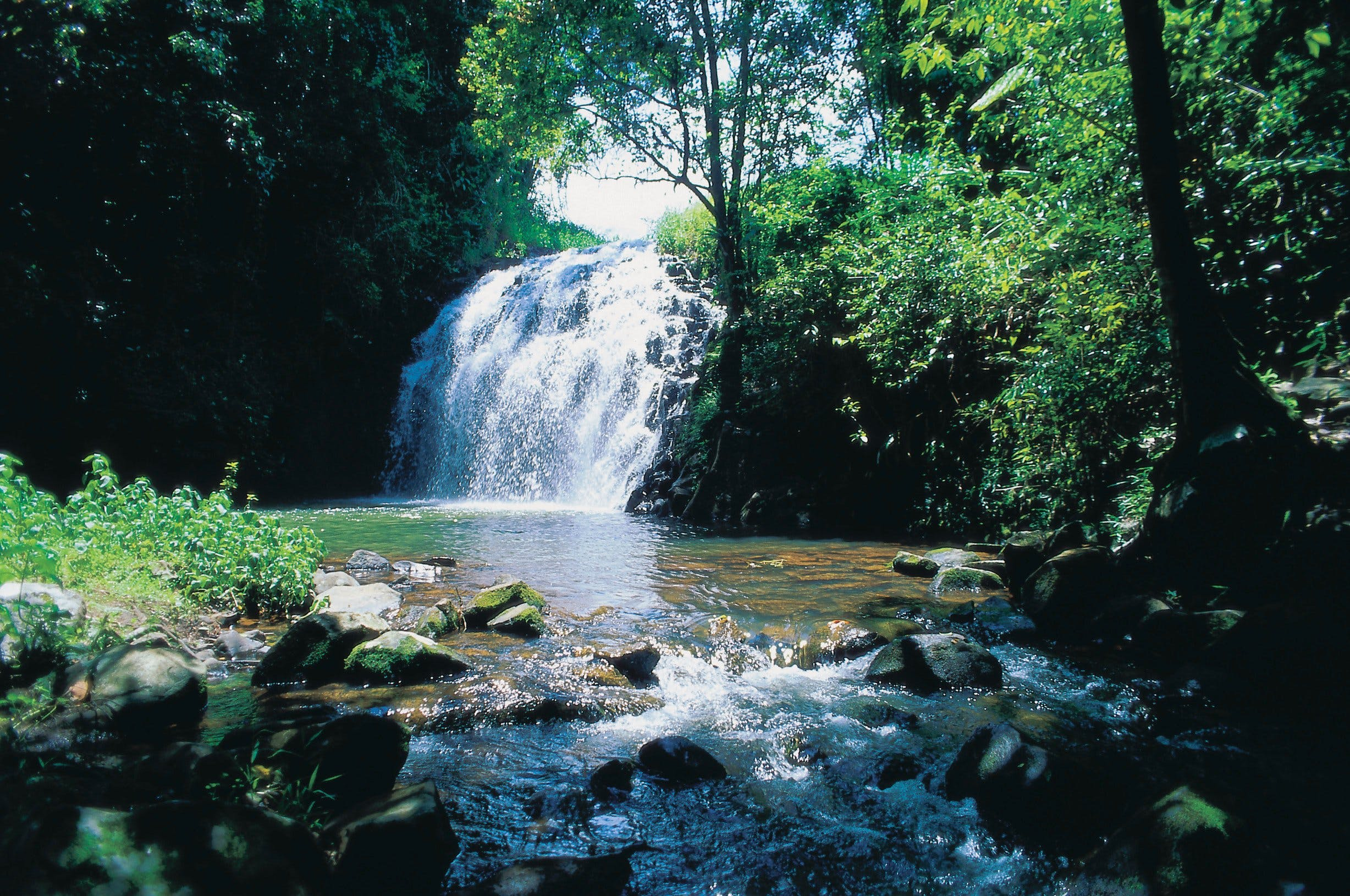 Pepina Falls - Accommodation BNB