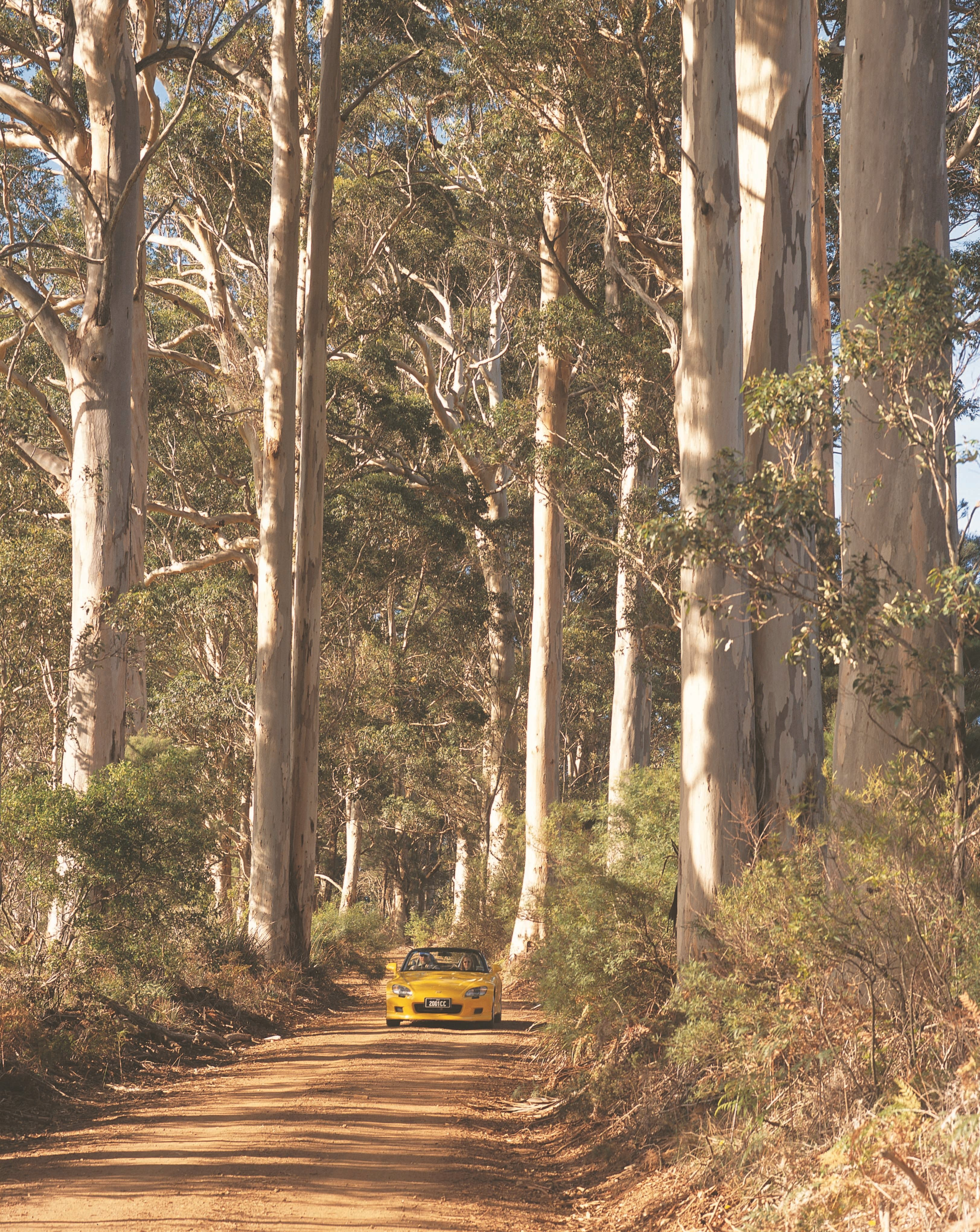 The Great Forest Trees Drive - Accommodation BNB